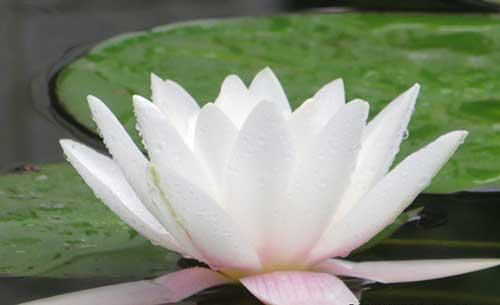 佛教十小咒
